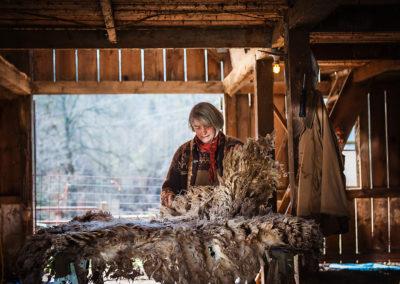 Woman inspecting sheep fleece after shearing