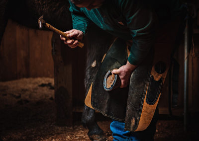Man with a hammer in his hand putting shoes on a horse holding hoof in between knees